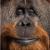 Profile picture of Al M